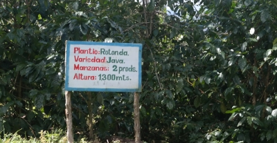 Sign for the Javanica coffee